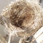 小鳥の巣1214674_1222966198